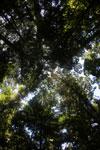 Borneo rainforest -- sabah_2889