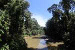 Danum river -- sabah_2890