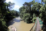 Bridge river over the Danum river -- sabah_2892