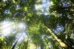 Borneo rainforest -- sabah_2894