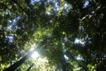 Borneo rainforest -- sabah_2895