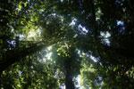 Borneo rainforest -- sabah_2896