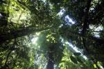 Borneo rainforest -- sabah_2898