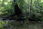 Rainforest creek -- sabah_2906