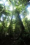Borneo rainforest -- sabah_2908