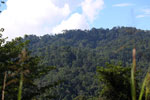 Danum Valley rainforest -- sabah_2921