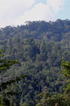 Danum Valley rainforest -- sabah_2922