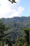 Danum Valley rainforest -- sabah_2926