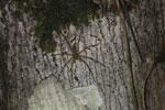Spider -- sabah_2965
