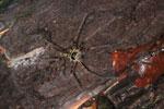 Spider -- sabah_2986