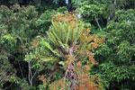 Borneo flora -- sabah_3115