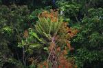 Borneo flora
