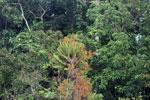 Borneo flora -- sabah_3117