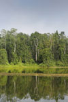 Rainforest around an oxbow lake in Borneo -- sabah_3191
