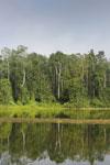 Rainforest around an oxbow lake in Borneo -- sabah_3191