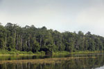 Rainforest around an oxbow lake in Borneo