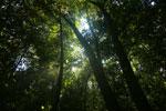 Borneo rainforest canopy -- sabah_3225