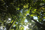 Reforestation project using native species in Borneo -- sabah_3238