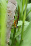 Grasshoppers -- sabah_3297