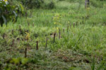 Restoration of a peat swamp