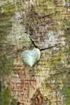 Snails -- sabah_3319