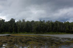 Oxbow lake in Borneo -- sabah_3339