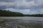 Oxbow lake in Borneo -- sabah_3341