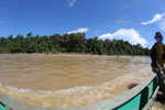 Logs being floated down the Kinabatangan River -- sabah_3351