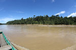 Logs being floated down the Kinabatangan River -- sabah_3352