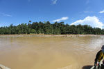 Logs being floated down the Kinabatangan River -- sabah_3356