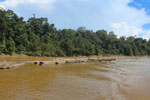 Logs being floated down the Kinabatangan River -- sabah_3360