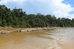 Logs being floated down the Kinabatangan River -- sabah_3361