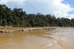 Logs being floated down the Kinabatangan River -- sabah_3362