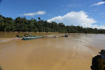 Logs being floated down the Kinabatangan River -- sabah_3363