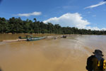 Logs being floated down the Kinabatangan River -- sabah_3364