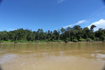 Rainforest along the Kinabatangan river -- sabah_3365