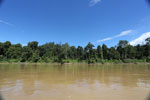 Rainforest along the Kinabatangan river -- sabah_3368