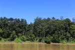 Rainforest along the Kinabatangan river -- sabah_3370