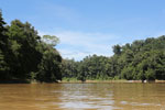 Rainforest along the Kinabatangan river -- sabah_3375