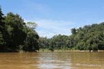 Rainforest along the Kinabatangan river -- sabah_3375