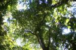 Rainforests -- sabah_3409