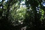 Local guides in the Borneo rainforest