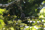 Raptor -- sabah_3412