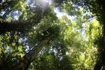 Borneo rainforest -- sabah_3424