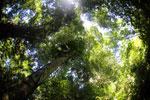 Borneo rainforest -- sabah_3425