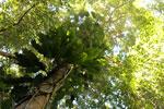 Borneo rainforest -- sabah_3426