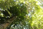 Borneo rainforest -- sabah_3427