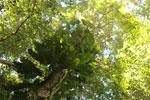 Borneo rainforest -- sabah_3428