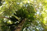 Borneo rainforest -- sabah_3429