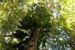 Borneo rainforest -- sabah_3430